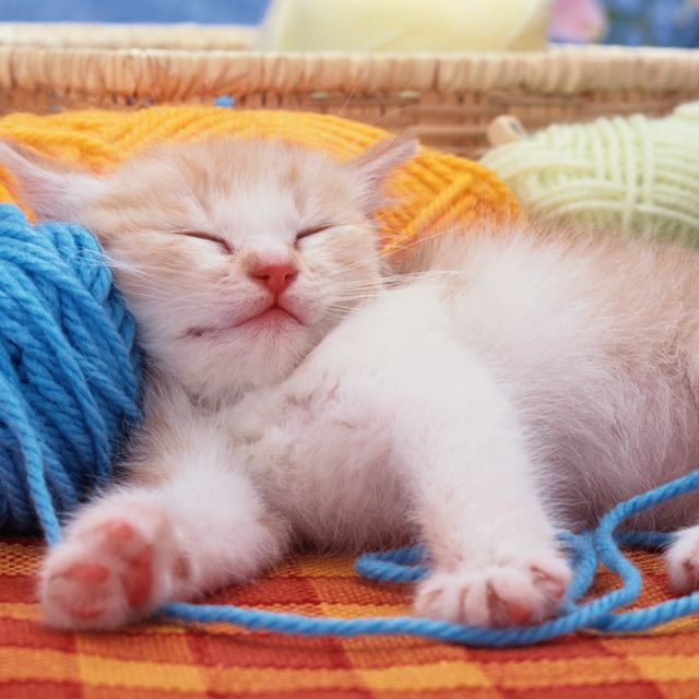 25 Best Cat Quotes Funny Cat Quotes