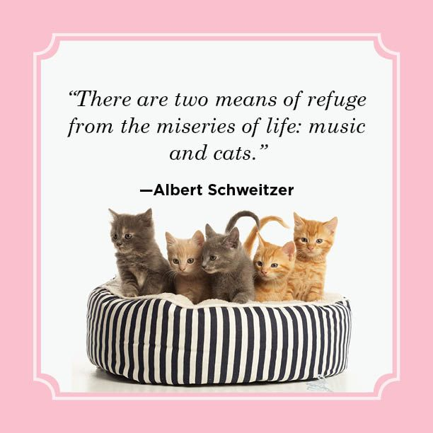 25 Best Cat Quotes , Funny Cat Quotes