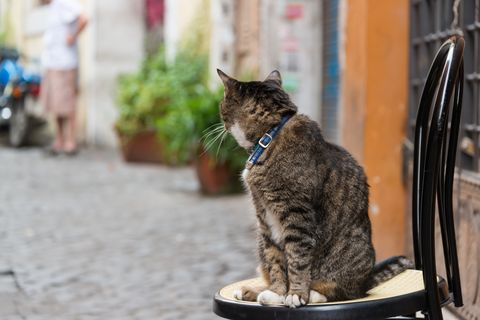 cat sitting on a chair in rome, italy