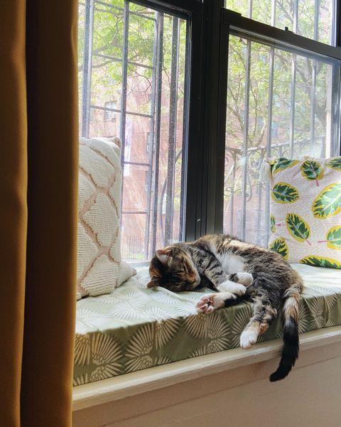 cat sleeping on window seat cushion
