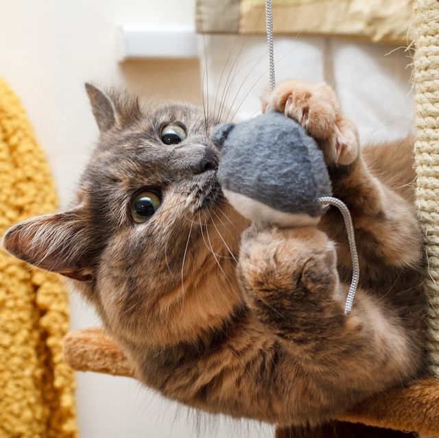 cat playing with a toy mouse on a cat scratch stand
