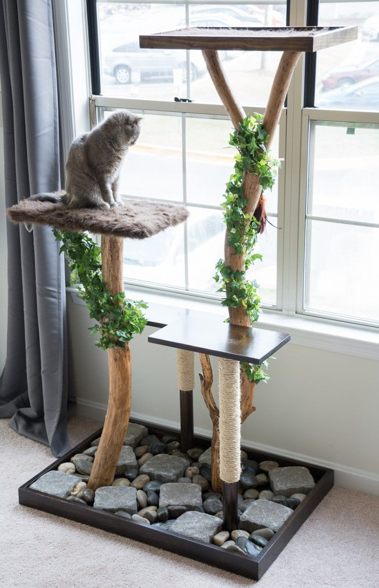 cat tree with real branches