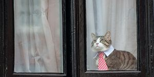 gatos cuarentena