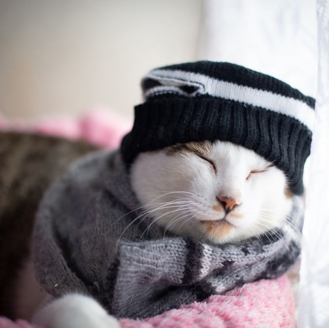 Cat wearing Knit hat and scarf