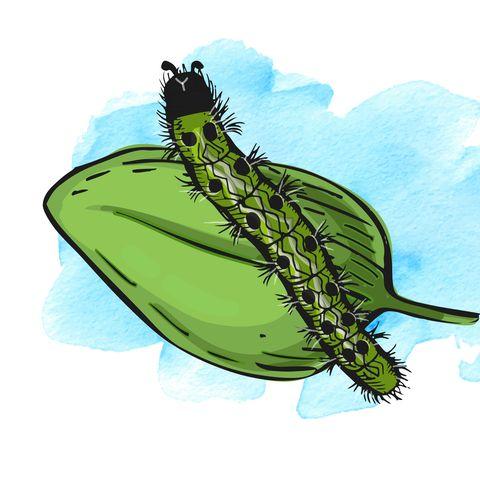 garden pests illustration