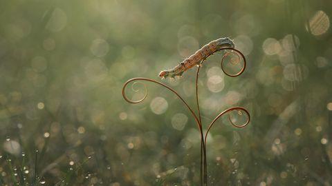 caterpillar on the stalk