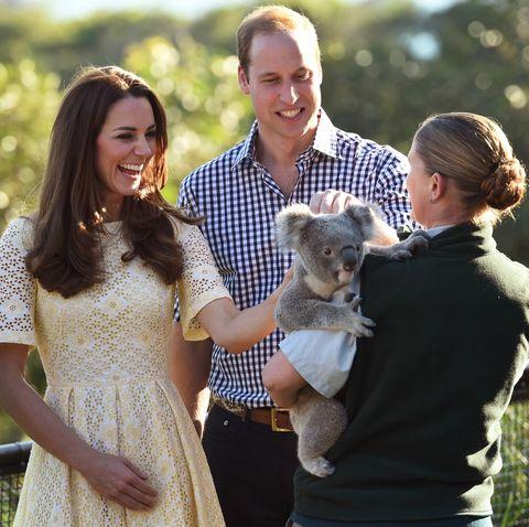 prince william kate middleton australia day koala