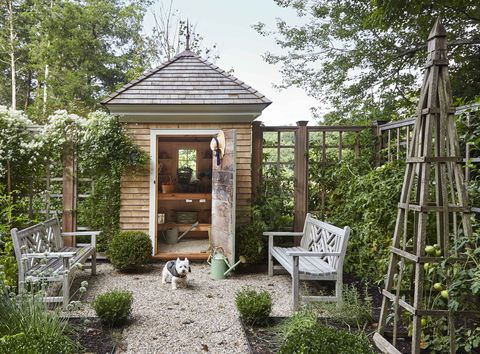 a pea stone path bordered by boxwood, veggies, and herbs leads to a shingled potting shed climbing the fence is sweet autumn clematis a westie dog stands in front of the doorway