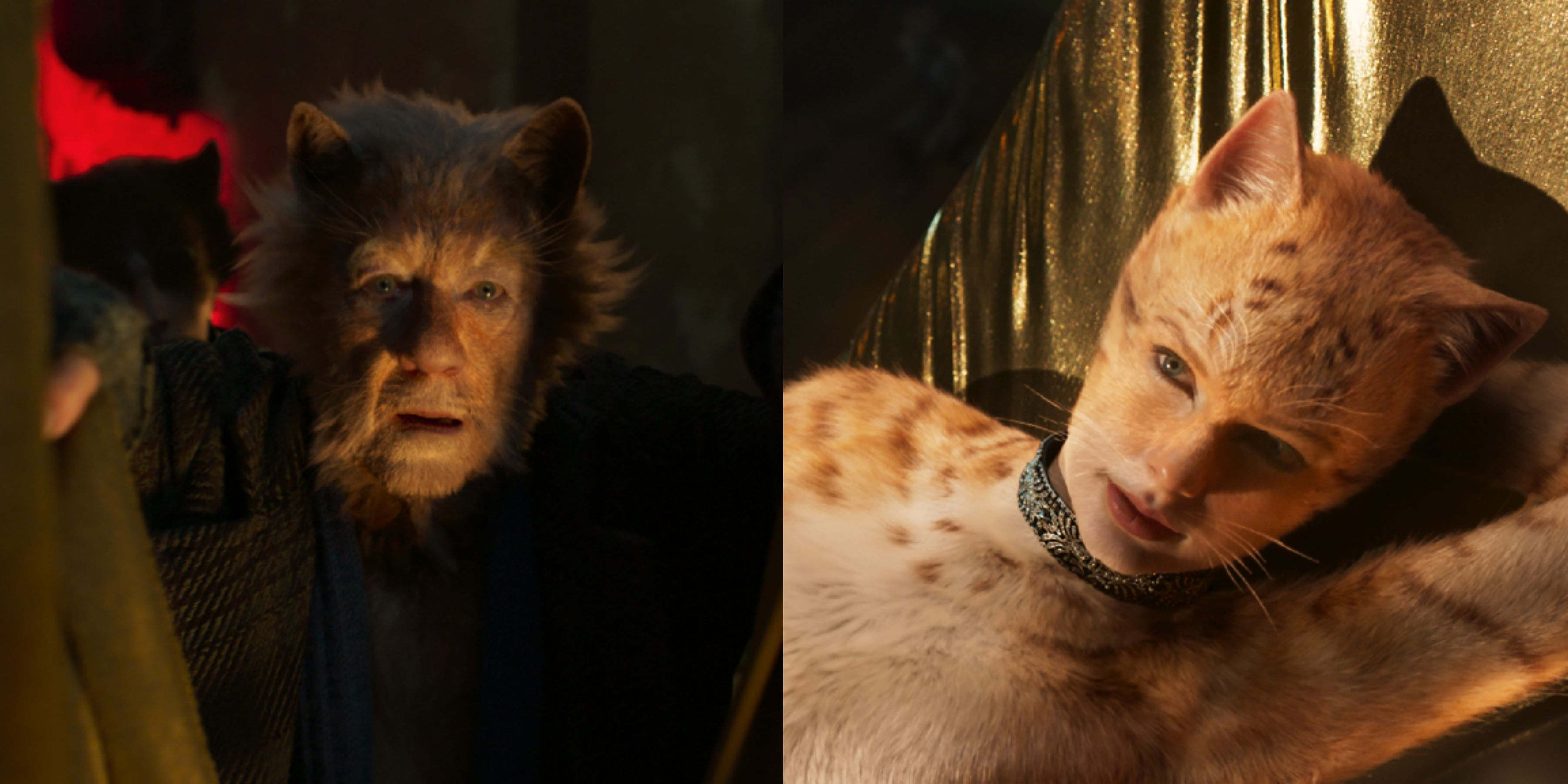 Best Cats Trailer Reactions , The Internet\u0027s Best Memes