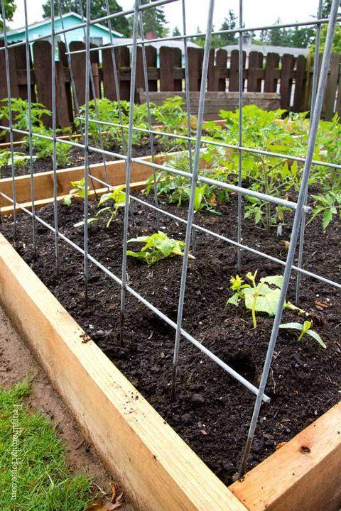 22 Best Diy Trellis Ideas Easy Garden, 8 Foot Garden Trellis