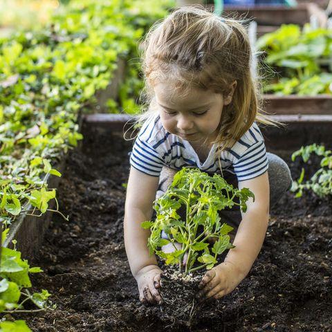 Girl planting in garden