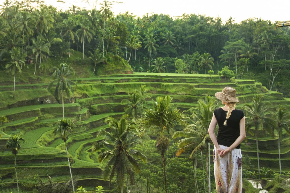Rice paddies in Ubud. Image: Getty Images / Smith Photographers