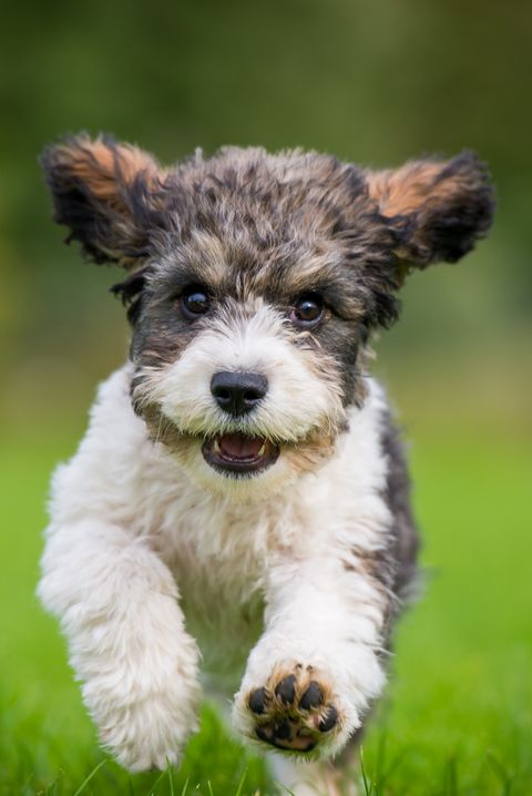 18 Best Mixed Breed Dogs Cutest