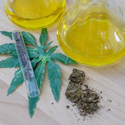 Herbal, Plant, Medicine, Herb, Pharmaceutical drug, Flower, Goldenrod, Passion flower family, Hemp family, Perennial plant,