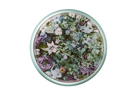Flower, Plant, Flowerpot, Herb, Flowering plant, Violet family, Oregano, Glechoma hederacea, Viola,