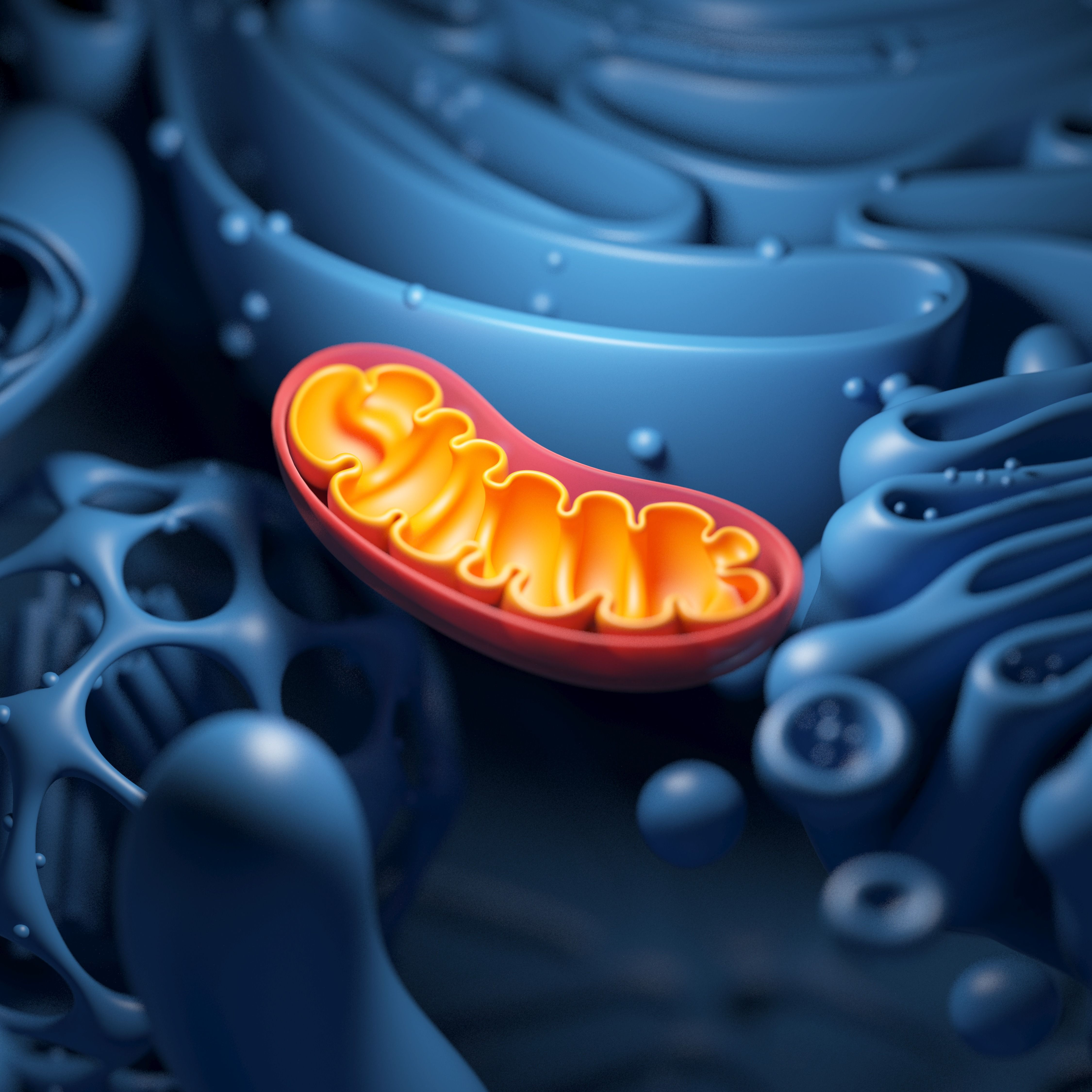Turns Out Mitochondria Don't Work Like We Thought They Did