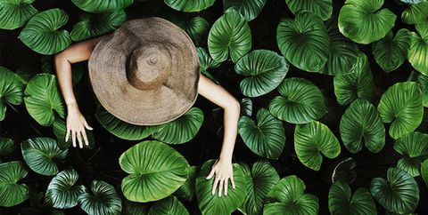 Organism, Leaf, Hat, Terrestrial plant, Pattern, Art, Colorfulness, Sun hat, Symmetry, Illustration,