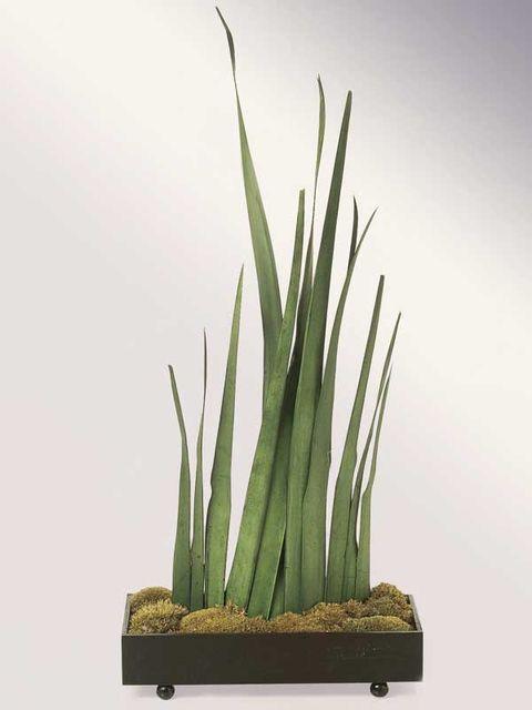 Grass, Plant, Flowerpot, Grass family, Ikebana, Houseplant, Flower, Terrestrial plant, Plant stem, Flowering plant,