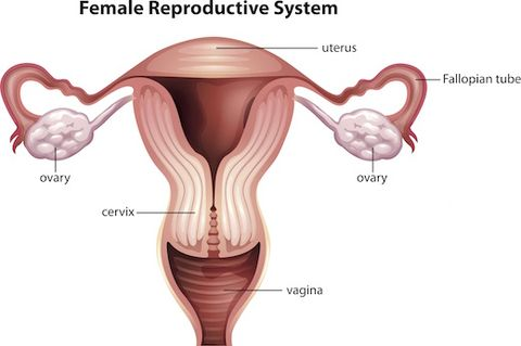 How Much Do You Really Know About Your Cervix Warning Graphic