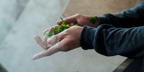 Hand, Finger, Thumb, Plant, Soil, Gesture, Nail, Asparagus, Vegetarian food, Food,