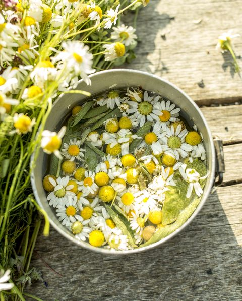 chamomile edible flowers