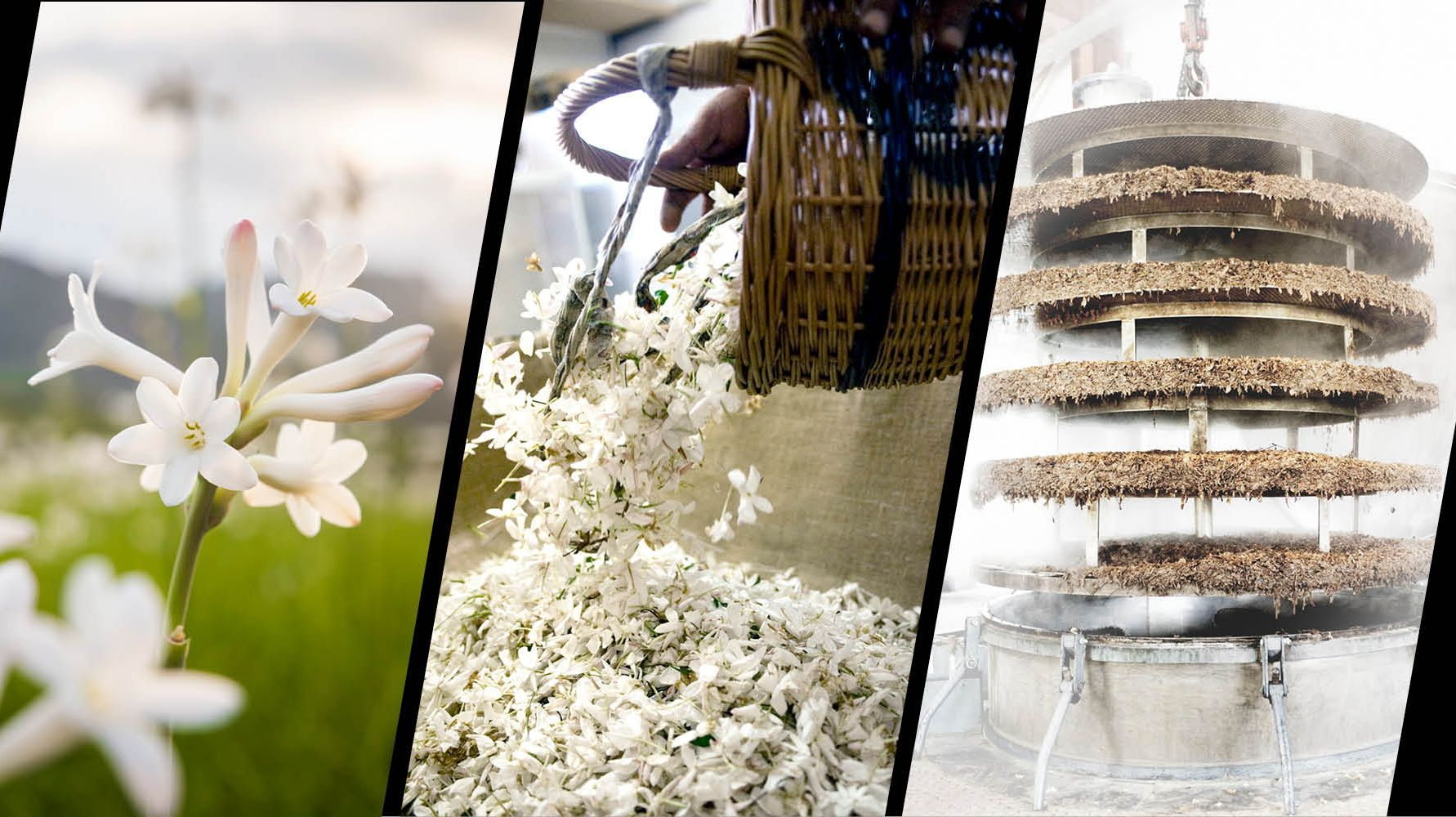 From flower to fragrance: the craftsmanship of a Chanel perfume