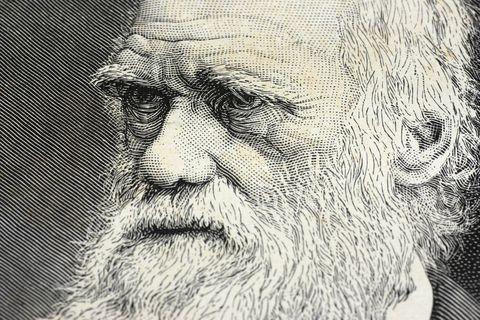Charles Darwin Glutton Club