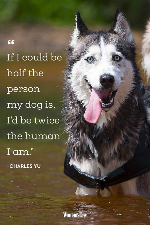 Dog Quotes - Charles Yu