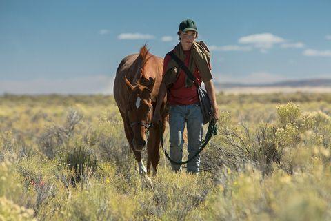 Grassland, Steppe, Wrangler, Ecoregion, Prairie, Wildlife, Ranch, Outerwear, Safari, Savanna,