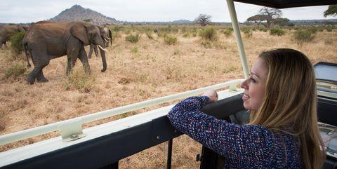 Elephant, Elephants and Mammoths, Wildlife, Safari, African elephant, Terrestrial animal, Adventure, Tusk, National park, Plant community,