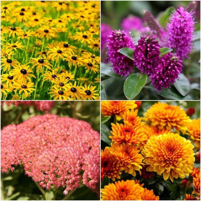 the best autumn plants for a chelsea flower show garden