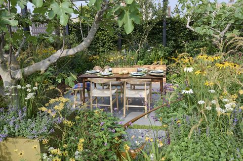 chelsea flower show 2021  the parsley box garden designed by alan williams