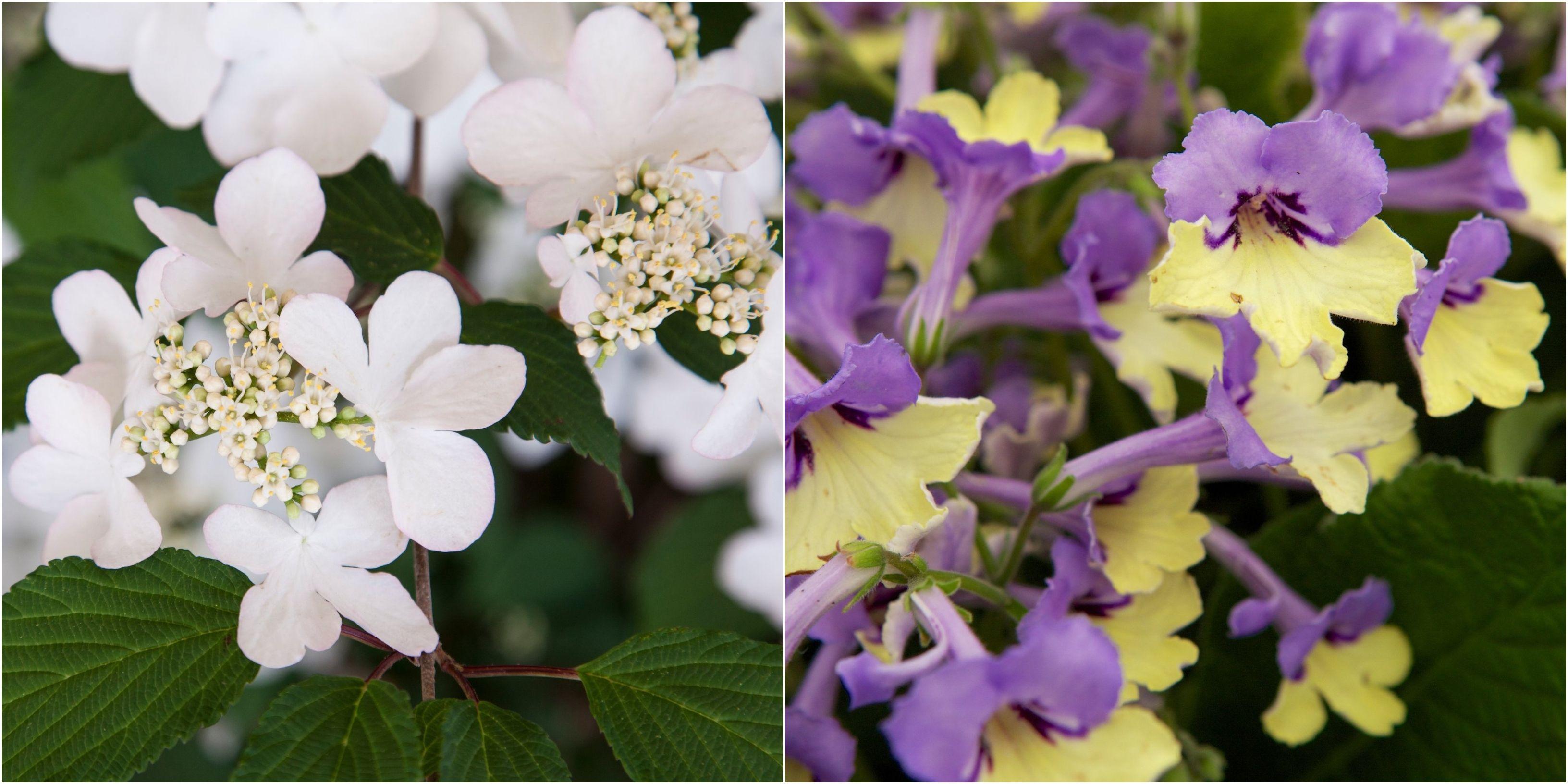 Chelsea Flower Show's Plant of the Decade winner revealed