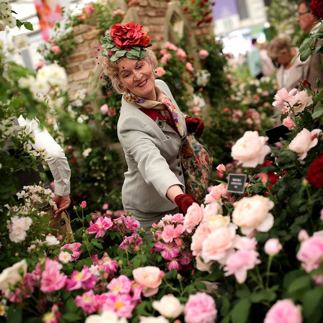 chelsea flower show plant of the decade