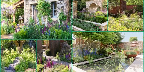 Image Paula Mcwaters Want To Know All The Chelsea Flower Show