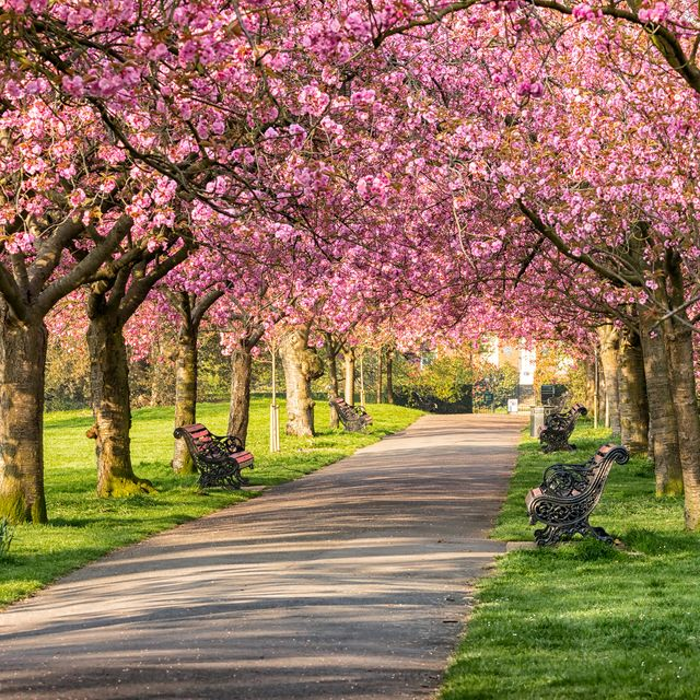 10 best uk cities to see spring flowers in 2021