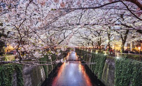 Where to go on holiday: Top holiday destinations 2020 - Japan
