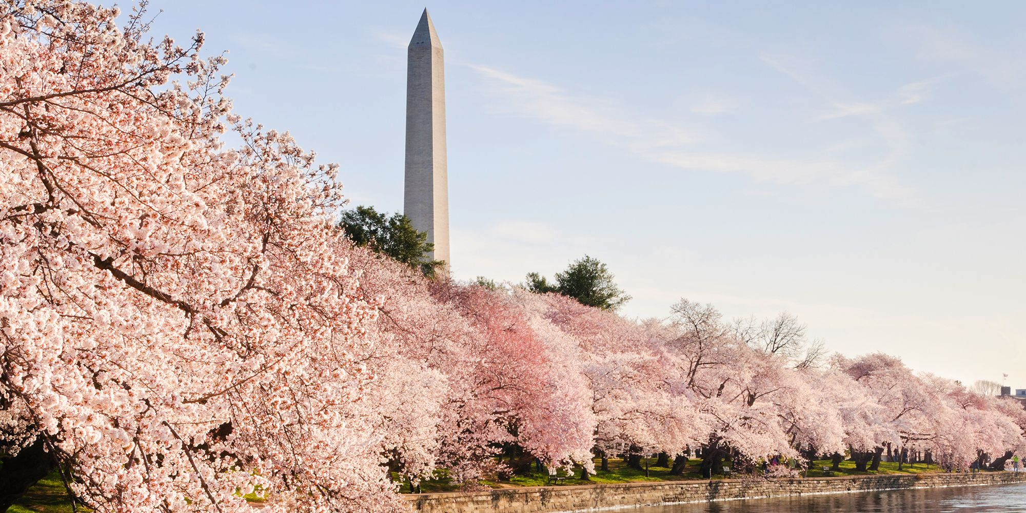 Where to See Cherry Blossoms Bloom in the US This Spring