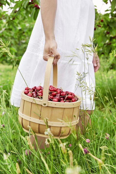 cherry picking summer activities