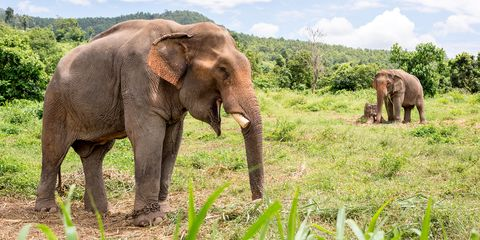 things to do in Thailand - Chiang Mai elephants