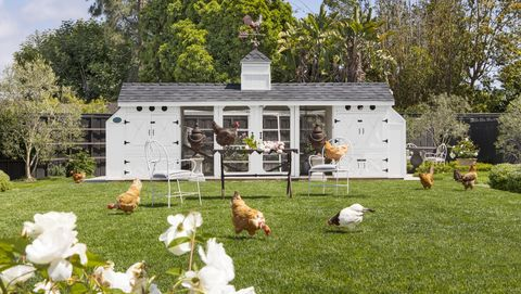 large chicken coop landscaping idea