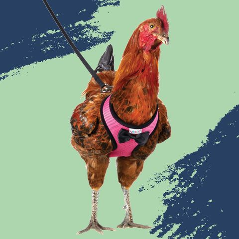Illustration, Horse, Organism, Liver, Graphic design, Chicken, Fictional character, Art,