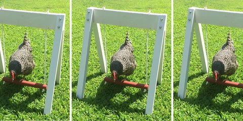You Can Get Your Chicken a Swing Set on Etsy, Because They Need Some Summer Fun