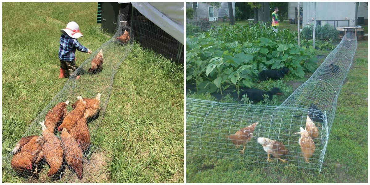 How To Make A Chicken Tunnel Diy Chicken Garden Run Tunnel