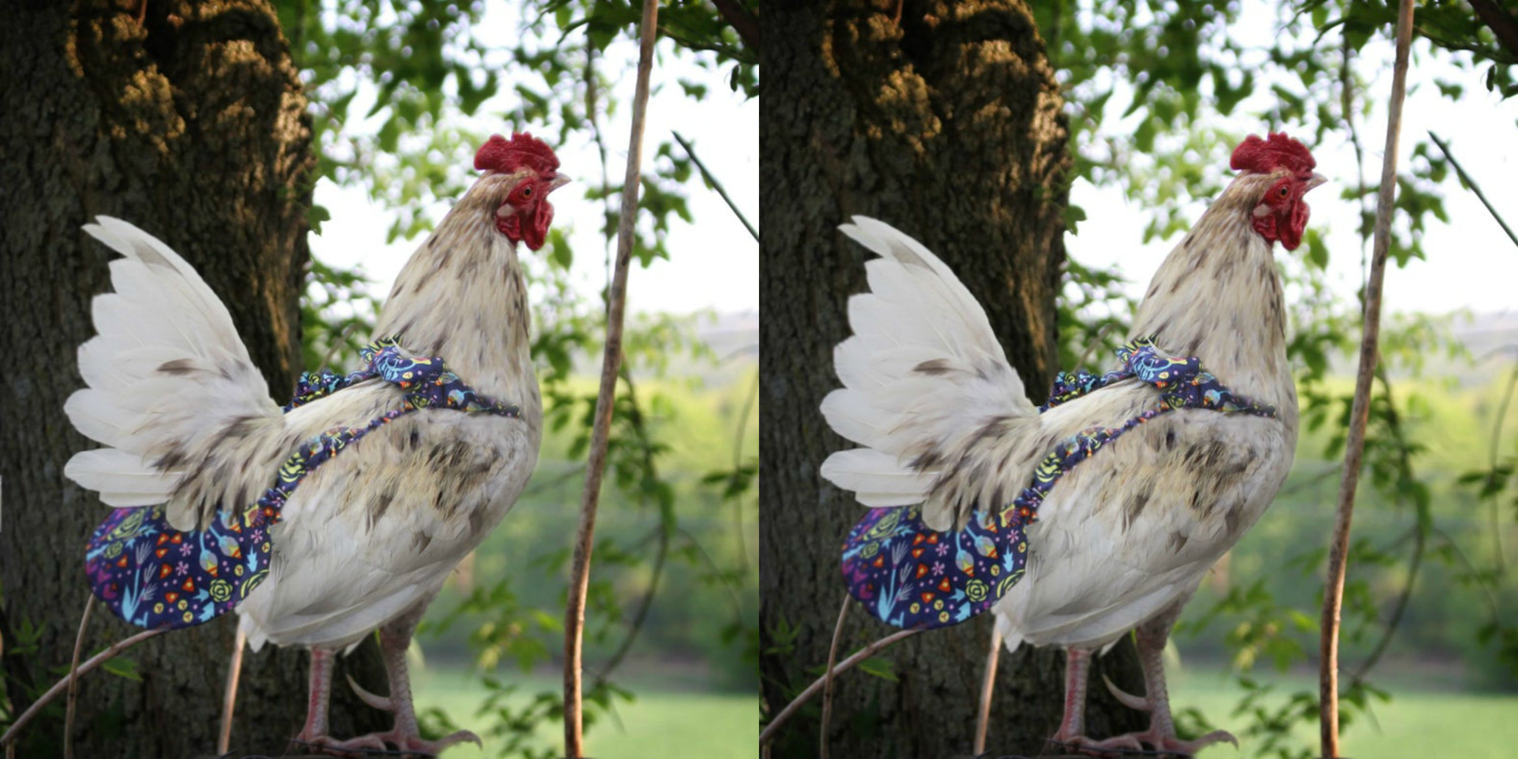 PamperYourPoultry Is Selling Chicken Diapers on Etsy, and They're Brilliant