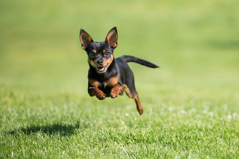 43 Best Small Dog Breeds Toy Breed Dogs