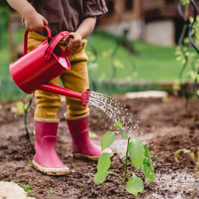 a little toddler in the garden, watering plants with can