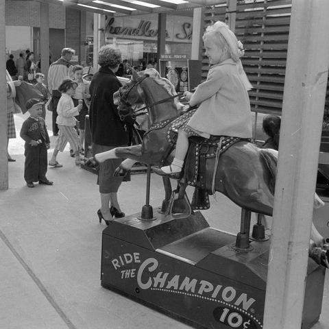 mall horse