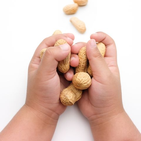 children's hand holding peanuts, isolated on a white background
