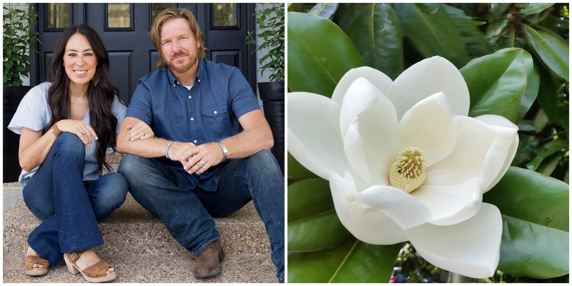 Chip And Joanna Magnolia Meaning Magnolia Market Name Meaning